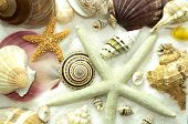 Cluster Of Seashells Seamless Background Pattern