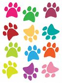 paws prints in different color