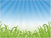 vector illustration of grass background