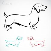stock photo of dachshund  - Vector image of an dog  - JPG