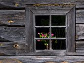 Flowers Trough The Old Window