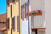 Flowers in pots on the balcony of a typical Italian house with wooden shutters and a tile roof in town of La Morra in Piedmont, Italy.