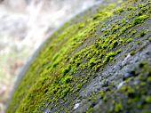 Nature Beats Concrete