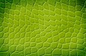 Green Snake Texture