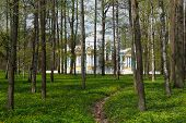 Pavilion In Catherine`s Park In Tsarskoe Selo Through The Woods