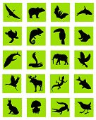 Animal Silhouette Green Icons