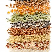 Cereal Grains and Seeds : Rye, Wheat, Barley, Oat, Sunflower, Corn, Flax, Poppy, border closeup on w