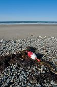 The buoy that got away