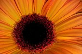 Orange Petals-2 poster
