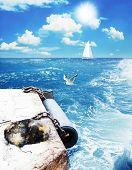 marine moorage and dog