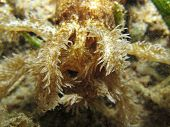 pic of echinoderms  - A worm sea cucumber