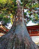Nara, Japan - November 16 2013:  Kasuga Taisha Established In 768, Rebuilt Several Times Over The Ce