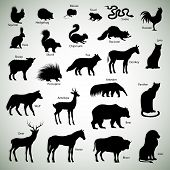 image of raccoon  - Set of animal silhouettes on abstract background - JPG