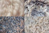 Four Sheepskin Backgrounds