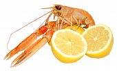 picture of norway lobster  - A single langoustine shellfish with lemons - JPG