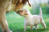 stock photo of puppies mother dog  - A close - JPG