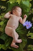 Newborn baby floating on green leaves in water pond of lotus flowers in nature