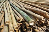 Many Stacks Of Bamboo Trunks