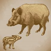 Vector Engraving Boar And Piglet