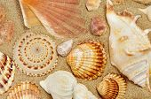 closeup of some seashells on the sand of a beach