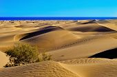 foto of canary  - a view of the Natural Reserve of Dunes of Maspalomas - JPG