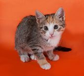 Tricolor Striped Kitten Sitting On Orange
