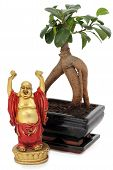 Bonsai And Buddha