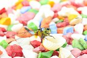 Blue Dragonfly  On Color Stone