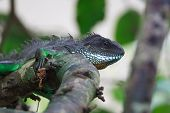 A Close Up Of Chinese Water Dragon