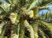 image of long distance  - palm tree against blue sky - JPG