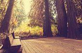stock photo of redwood forest  - boardwalk in forest - JPG