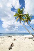 Idealic Caribbean Coastline