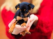 stock photo of petting  - Pets and people pet adoption - JPG