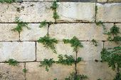 Life growning on the Western Wall
