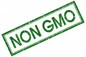 Non Gmo Green Square Stamp Isolated On White Background