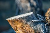 pic of ice crystal  - Close up photo of a tree trunk covered with ice crystals in wintertime - JPG