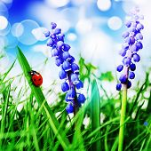 foto of ladybug  - little red ladybug on fresh green grass - JPG