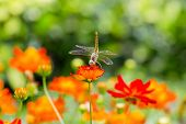 stock photo of dragonflies  - Closeup Dragonfly wings on beautiful flower on outdoor garden background - JPG
