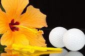 image of hibiscus  - Orange hibiscus flower and golf equipments on the glass plate - JPG