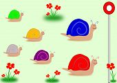 picture of snail-shell  - Six - JPG