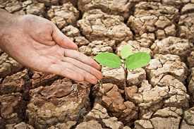 picture of water shortage  - hands watering a tree on cracked and dry earth - JPG