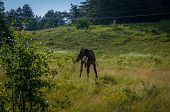 stock photo of horses eating  - Grazing horses in the morning on the lawn of a horse eating grass - JPG