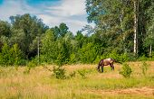 pic of horses eating  - Grazing horses in the morning on the lawn of a horse eating grass - JPG