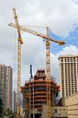 Waikiki Cranes