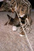 Kitten Pulling String