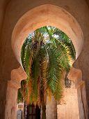 Arabian Gardens