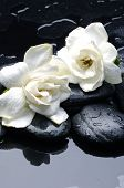 wellness and health /massage stones and gardenia flower