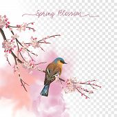 Spring Blossom. Flowering Plum Branch And Bird In Springtime On A Transparent Watercolor Background poster
