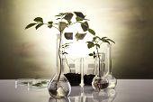 Equipamento de vidraria de laboratório químico, ecologia