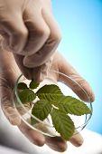 Pesquisa, plantas que crescem em tubos de ensaio em um laboratório de pesquisa